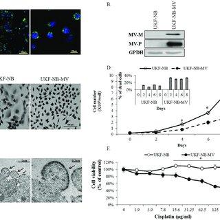 (PDF) MiRNA-124 is a link between measles virus persistent