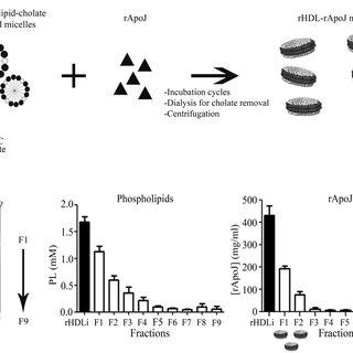 rHDL-rApoJ and liposome biodistribution in C57/BL6 mice