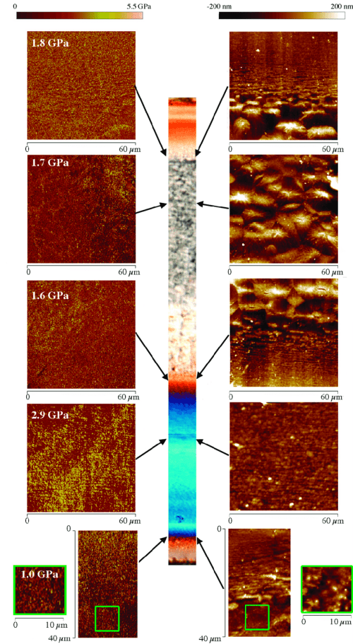 small resolution of atomic force microscopy afm maps height and modulus obtained in different zones