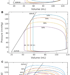 effects on pressure volume loop by due to a change in a preload at a download scientific diagram [ 682 x 1434 Pixel ]