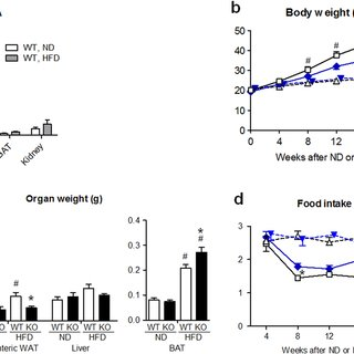 (PDF) Obesity-promoting and anti-thermogenic effects of