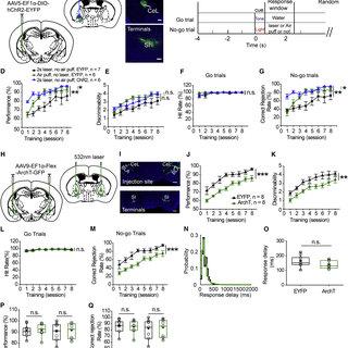 A Central Amygdala Substantia Innominata Neural