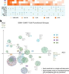 polyfunctional heat map and pat pca reveal distinct cd8 car t cell profiles across donors [ 850 x 1112 Pixel ]