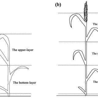 (PDF) Off-Nadir Hyperspectral Sensing for Estimation of