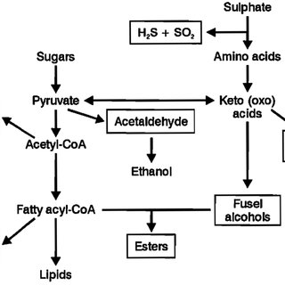 Process diagram of the boiling system of Schulz using a