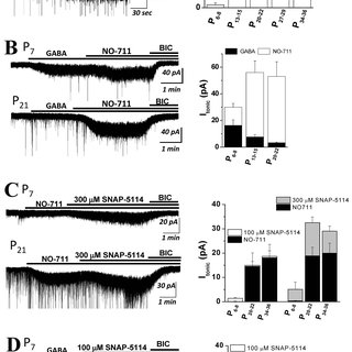 (PDF) Developmental changes in GABA A tonic inhibition are