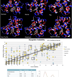 critical residue and foldability comparison across myoglobin for 6 species a the output colored [ 850 x 1054 Pixel ]