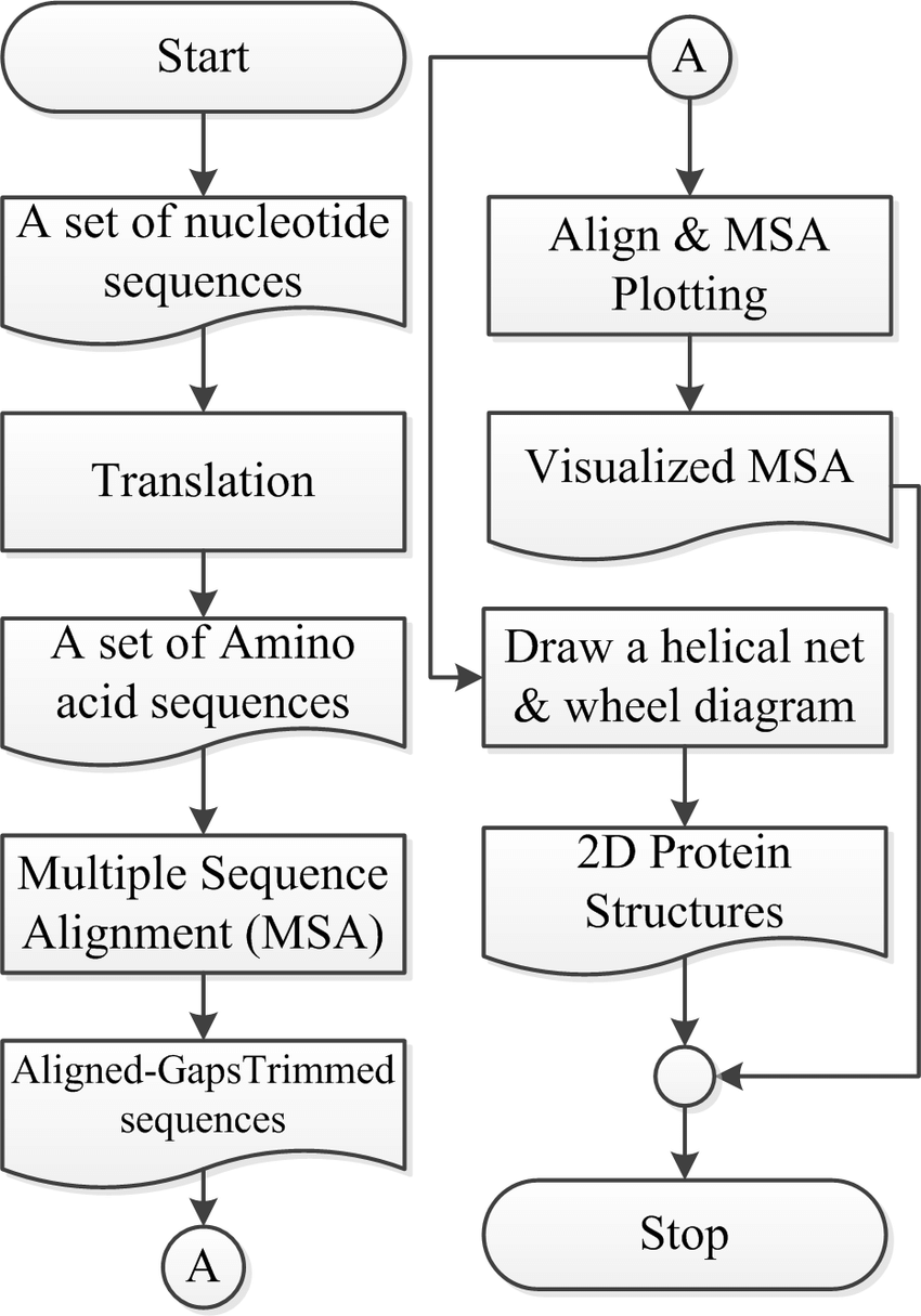 medium resolution of the proposed 2d protein structure analysis steps