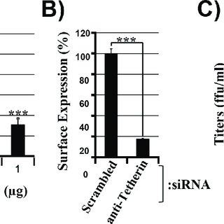 (PDF) The glycoprotein of vesicular stomatitis virus