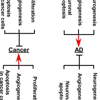 (PDF) RCAN1 in the inverse association between Alzheimer's
