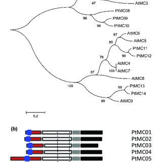 (PDF) The function of two type II metacaspases in woody