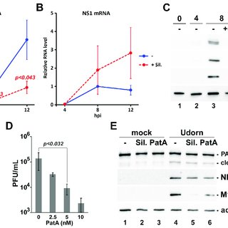 Conformational plasticity of the influenza A virus NS1