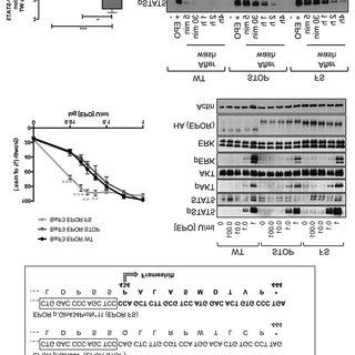 (PDF) New pathogenic mechanisms induced by germline