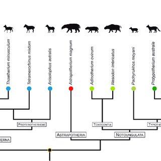 (PDF) MORPHOLOGICAL INTEGRATION OF NATIVE SOUTH AMERICAN