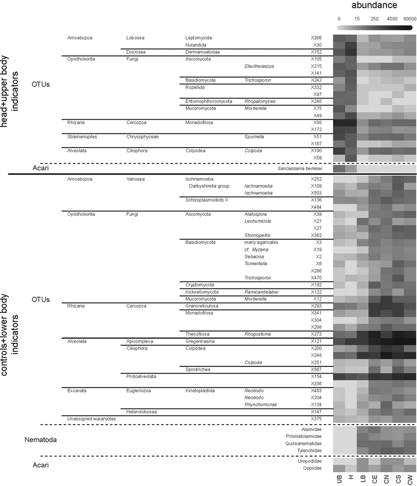 hight resolution of abundance of the bioindicators of head and upper body h ub and controls and lower body c lb from a criminal case investigation in switzerland
