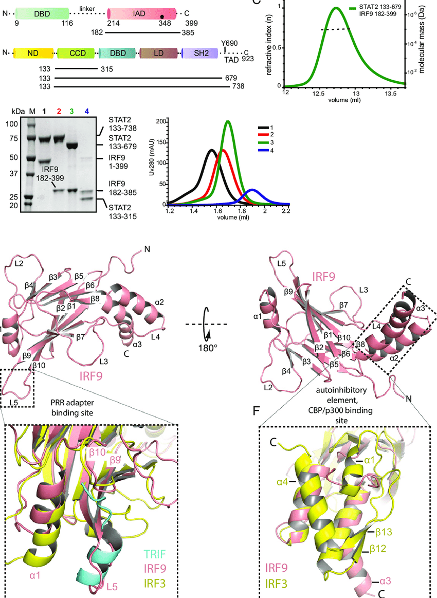 hight resolution of characterization of the stat2 irf9 complex and structure determination of the irf9 iad