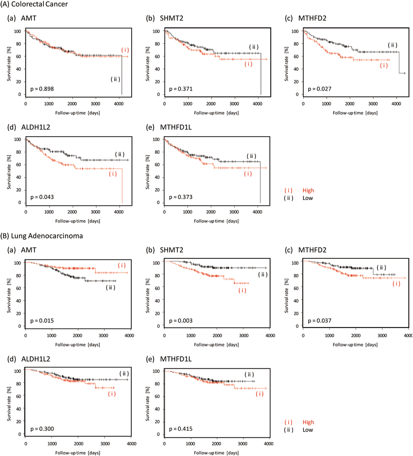 Kaplan-Meier curves of overall survival for (A) colorectal
