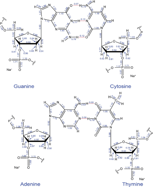 small resolution of computed ddec6 bond orders in the guanine cytosine and adenine thymine base pairs