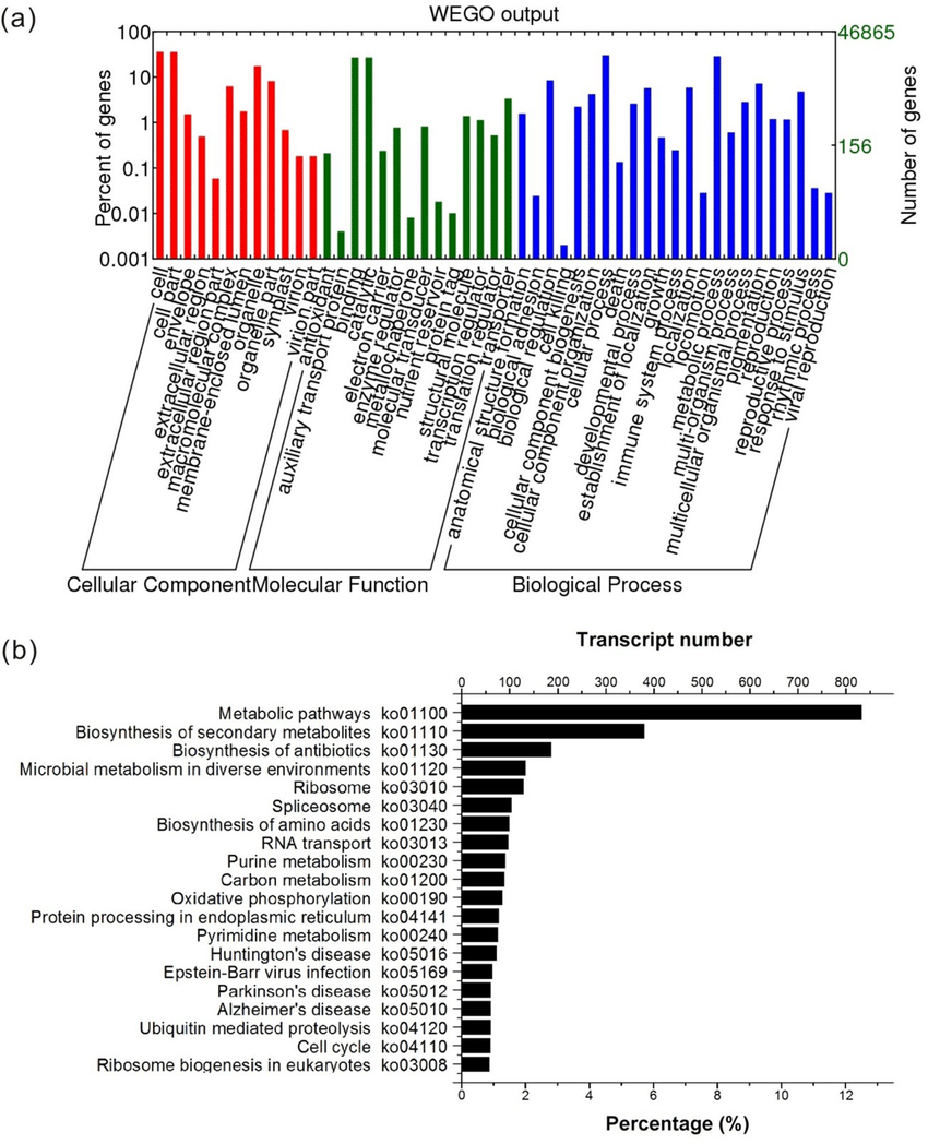 medium resolution of gene ontology and kyoto encyclopedia of genes and genomes enrichment of k obovata transcriptome assembled