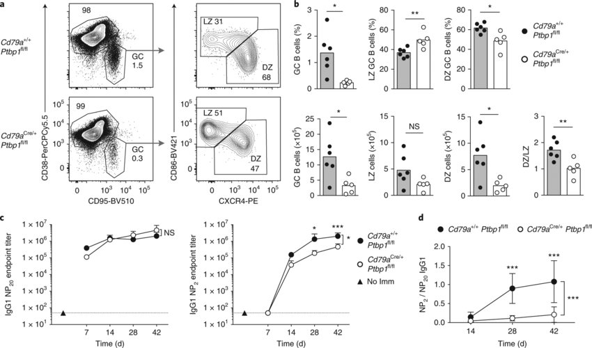 PTBP1 is necessary for GC B cell responses a, Gating