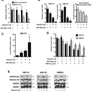 EZH2 interacts with PARP1 and is PARylated after DNA