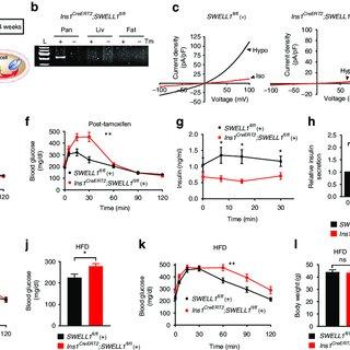 (PDF) SWELL1 is a glucose sensor regulating β-cell