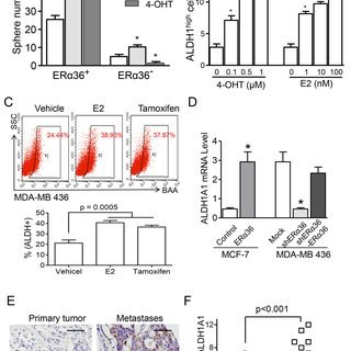 (PDF) Tamoxifen enhances stemness and promotes metastasis