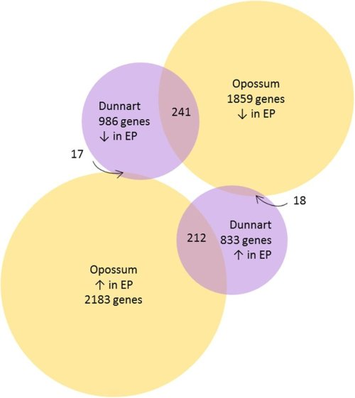 small resolution of venn diagram indicating the differentially expressed genes between opossum pre implantation pregnant and non