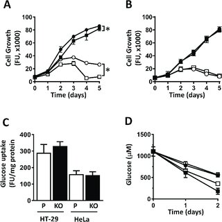 Effect of p53 siRNA on ROS production and cell apoptosis