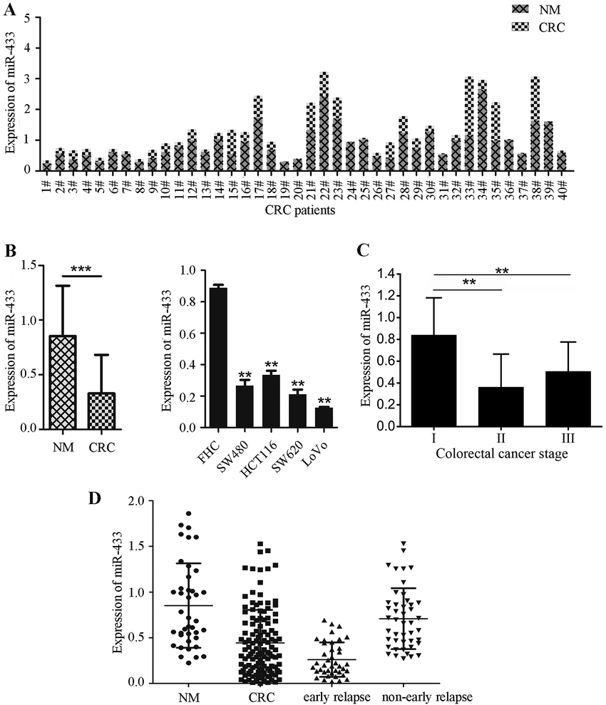 medium resolution of reduced mir 433 expression in human colorectal cancer tissue samples and cell lines a rt qpcr analysis of mir 433 levels