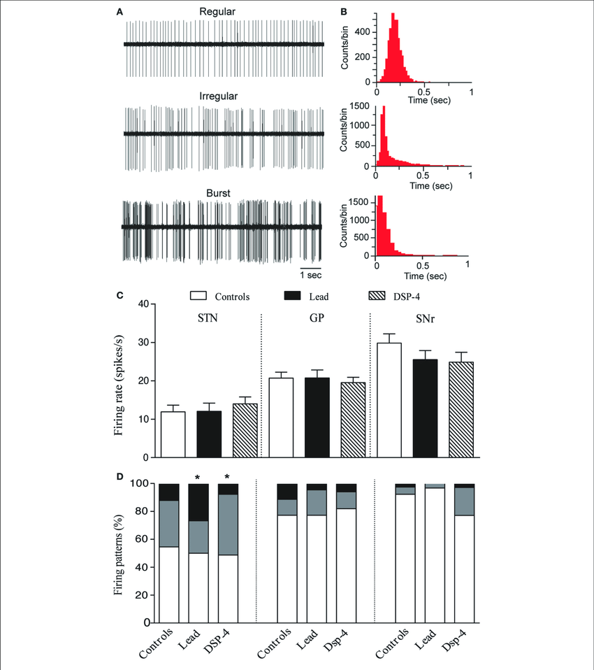 hight resolution of effects of lead and dsp 4 treatments on the electrical activity of stn gp and snr neurons a representative examples of spike trains and the