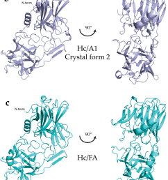 crystal structures of hc domains a hc a1 domain crystal form [ 850 x 2097 Pixel ]