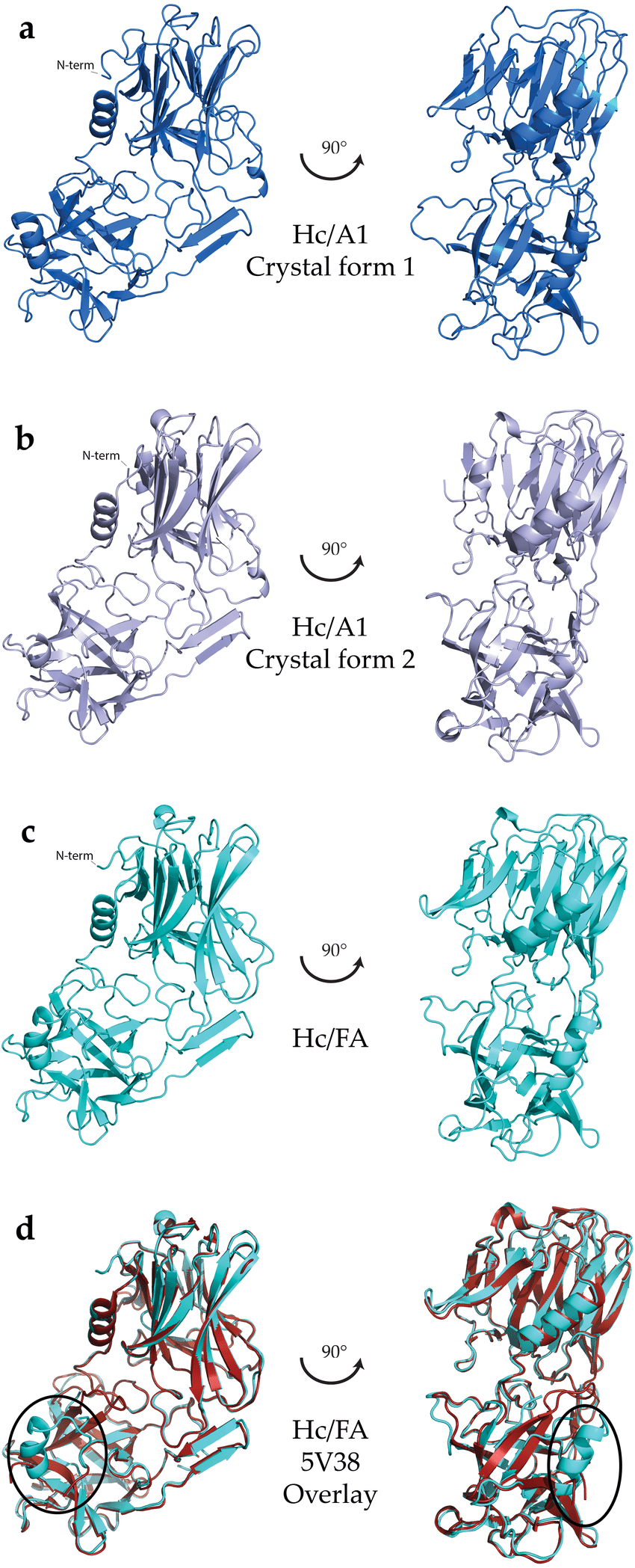hight resolution of crystal structures of hc domains a hc a1 domain crystal form