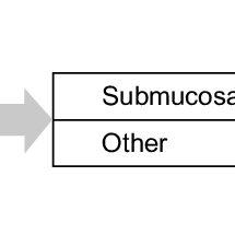 example pathway for HMB. Abbreviations: HMB, heavy