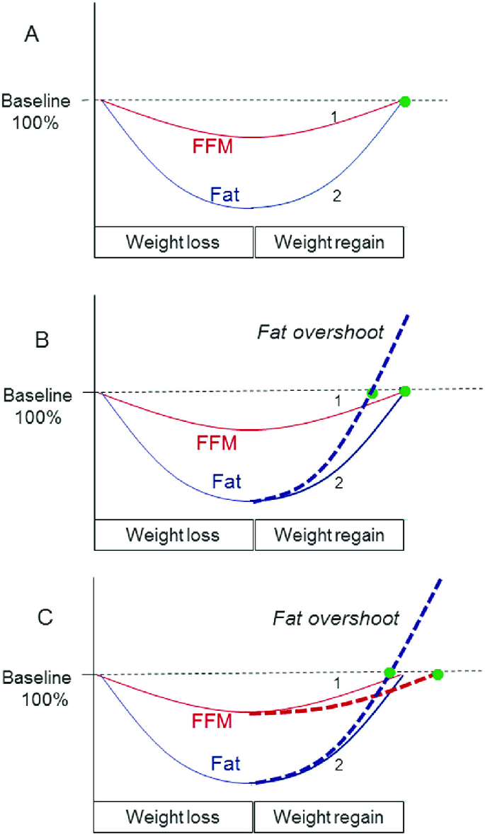 hight resolution of schematic diagrams depicting dynamics of body composition recovery with fat and ffm synchronization a or