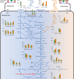 distinct central metabolic pathways and relative abundances of transcripts in cellulose and xylan cultures solid arrows indicate genes for the reaction  [ 850 x 1152 Pixel ]