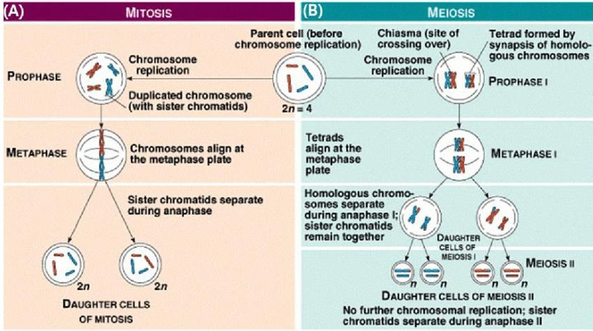 Nucleotide Diagram Unlabeled