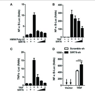 | SIRT6 interacts with the DNA binding domain of p65 and