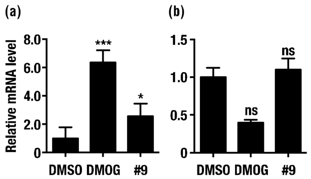 Expression levels of CA9 (a) and HIF-1α mRNA. (b) SK-N-BE