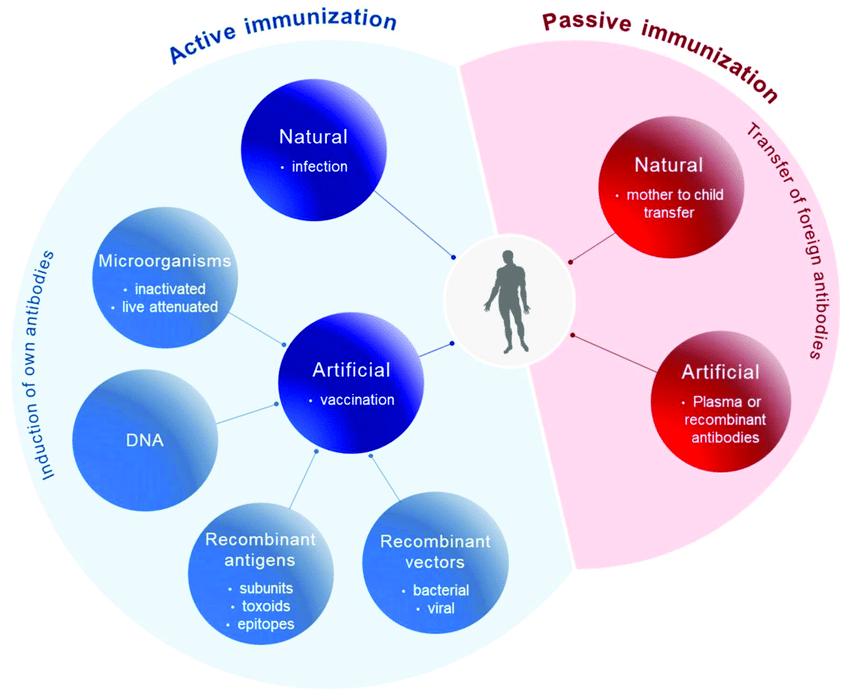 principles of immunization active
