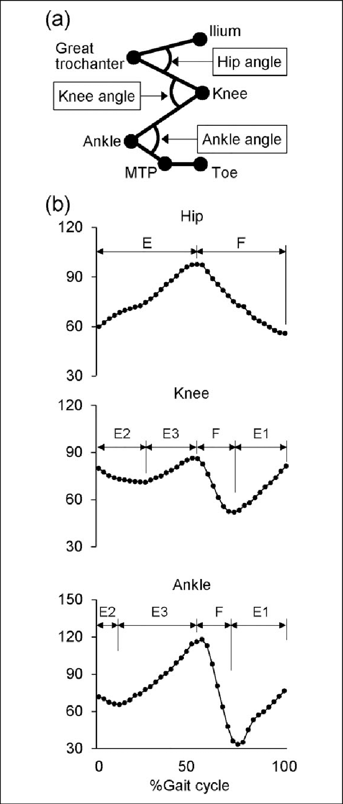 Joint angles and gait cycle phases. (a) Definitions of the