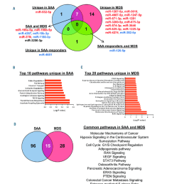 a venny an interactive tool for comparing lists with venn diagrams was used to find common or unique mirnas among severe aplastic anemia saa  [ 850 x 995 Pixel ]