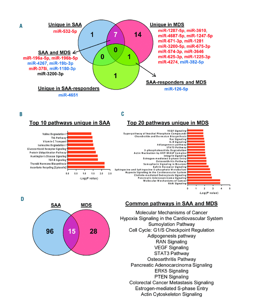 medium resolution of  a venny an interactive tool for comparing lists with venn diagrams was used to find common or unique mirnas among severe aplastic anemia saa