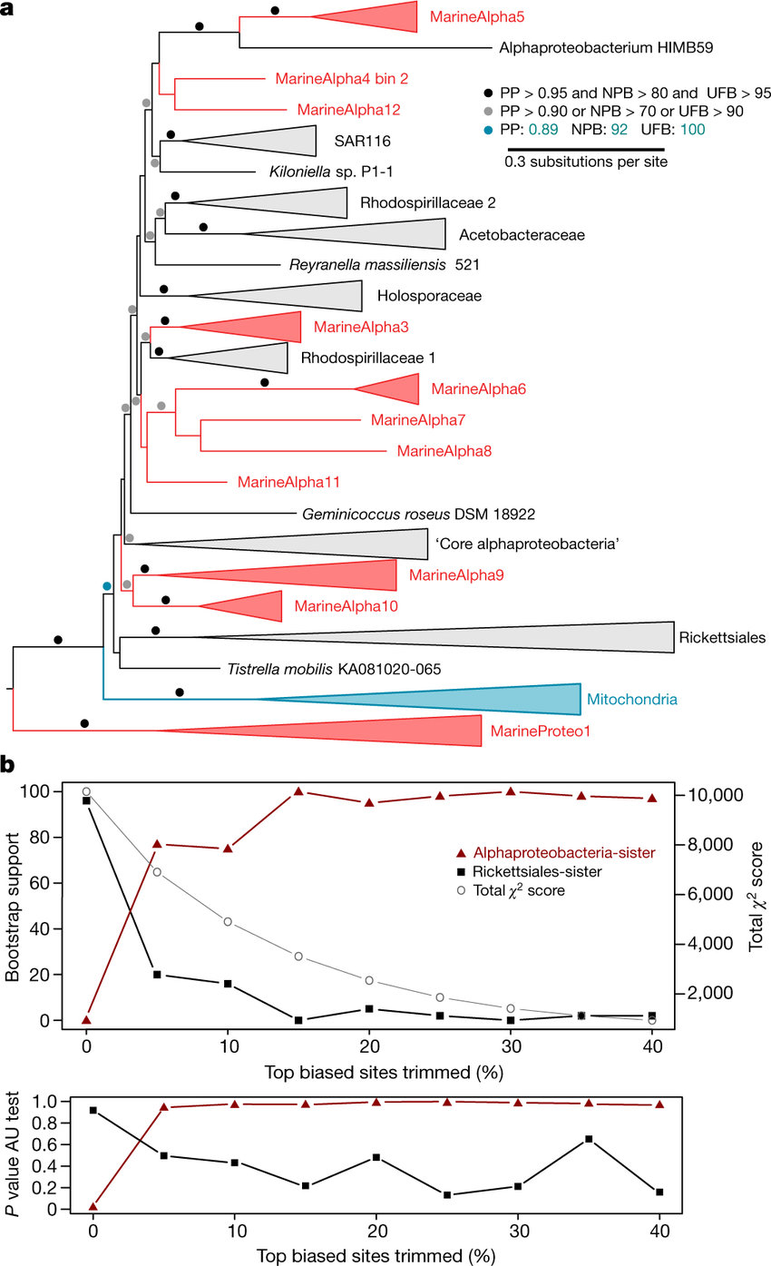 hight resolution of an early branching mitochondrial ancestor phylogenetic placement of the download scientific diagram
