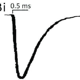 Mechanism of evolution of male heterogametic sex