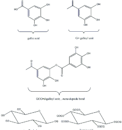 structure of gallic acid and pentagalloyl glucose and tannic acid structure of gallic acid and pentagalloyl [ 850 x 960 Pixel ]