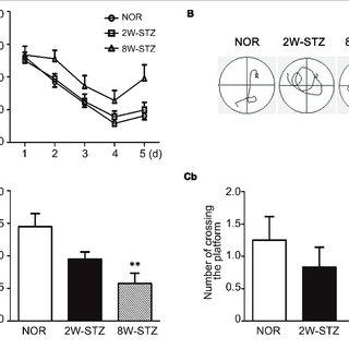 (PDF) Blood-Brain Barrier Disruption Induced Cognitive