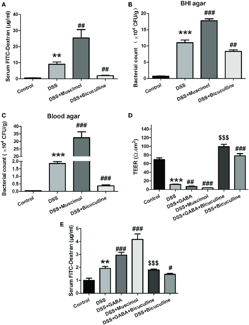 hight resolution of  gamma aminobutyric acid gaba increases the permeability of colon download scientific diagram