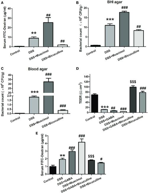 small resolution of  gamma aminobutyric acid gaba increases the permeability of colon download scientific diagram