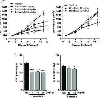 (PDF) Lenvatinib inhibits angiogenesis and tumor